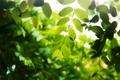 Картинка листья, капли, ветка, зеленые