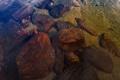 Картинка вода, прозрачность, озеро, камни, дно