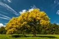Картинка поле, осень, небо, облака, деревья