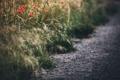 Картинка дорога, трава, маки