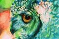 Картинка сова, краски, рисунок
