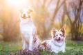 Картинка природа, собаки, свет