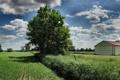 Картинка widescreen wallpapers, трава, 3200x1200, поле, дерево, деревья, дома