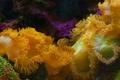 Картинка природа, океан, краски, Таиланд, морской анемон