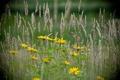 Картинка лето, трава, цветы, природа