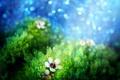 Картинка цветок, light tasting, свет, мох, игра