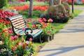Картинка цветы, парк, слоны, скамья