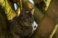 Картинка кошка, тень, мордочка, на дереве