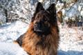 Картинка друг, зима, собака