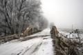Картинка зима, дорога, мост, Canada, Ontario