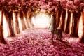Картинка девушка, деревья, цветы, волк, прогулка, аллея, венок