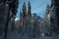 Картинка зима, лес, пейзаж, утро