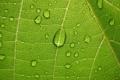Картинка зеленый, растения, виноградный лист