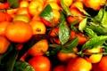 Картинка мандарины, листья, фрукты, урожай
