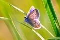 Картинка бабочка, насекомое, трава