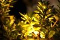 Картинка листья, свет, желтый, природа, листва