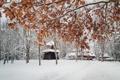 Картинка зима, снег, дерево