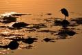 Картинка закат, птица, свет, вода, природа