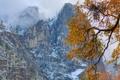 Картинка осень, горы, природа, дерево