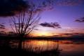 Картинка деревья, фото, обои, пейзажи, вид