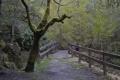 Картинка лес, деревья, парк, спуск, лестница