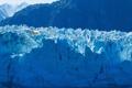 Картинка птица, чайка, ледник, Аляска, Alaska, Glacier Bay National Park, Глейшер Бей