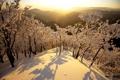 Картинка зима, снег, деревья, горы, рассвет, япония, утро