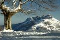 Картинка зима, снег, горы, дерево, Испания, Spain, Basque Country