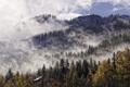 Картинка крыша, лес, небо, облака, деревья, туман, домик