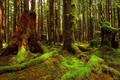 Картинка лес, деревья, заросли, мох, чаща