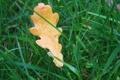 Картинка осень, трава, макро, желтый, природа, дерево, обои