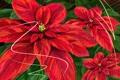Картинка листья, цветы, красный, зеленый, poinsettia