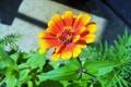 Картинка цветок, лепестки, желто-оранжевый цветок