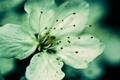 Картинка пыльца, тычинки, листки