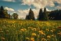 Картинка трава, облака, деревья, цветы, горы