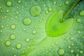 Картинка вода, капли, лист, зеленый, сердечко
