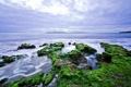 Картинка камни, небо, водоросли, море