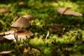 Картинка лес, трава, листья, макро