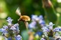 Картинка цветы, фон, голубые, насекомое