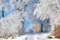 Картинка Зима, снег, деревья, дорога, иней