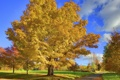 Картинка дорога, осень, листья, дерево, Природа