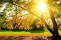 Картинка листья, трава, солнце, ветви, природа, дерево
