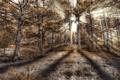 Картинка лес, солнце, лучи, hdr, хвойный
