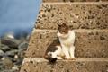 Картинка кот, сидит, кошак, взгляд, кошка