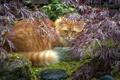 Картинка природа, взгляд, кошка