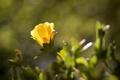 Картинка цветок, листья, желтые, лепестки