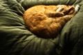 Картинка кот, рыжий, спит, cat, sleep