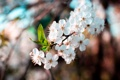 Картинка цветы, ветка, весна, бутон, лепесток, цветение