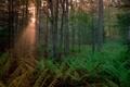 Картинка природа, лес, свет