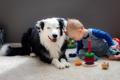 Картинка настроение, собака, малчик
